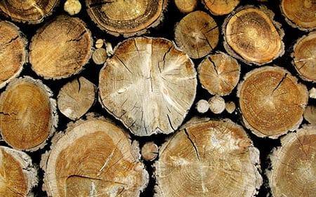 Уникальные свойства древесины